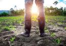 COPAGRI: RECOVERY FUND, L'AGRICOLTURA È IL MOTORE PROPULSIVO DEL TANTO DECANTATO CAMBIO DI PASSO GREEN