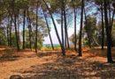 It's Fall Season!  Pitchup.com consiglia 5 campeggi per una fuga alla scoperta di attività immerse nella natura