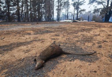 PETA offre consigli per la salvaguardia degli animali durante gli incendi forestali