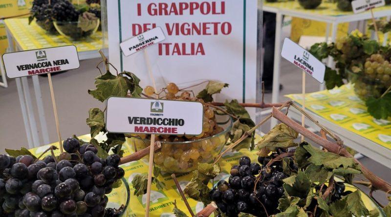 Vinitaly, Coldiretti Marche: vigneti autoctoni sugli scudi, boom di vendite